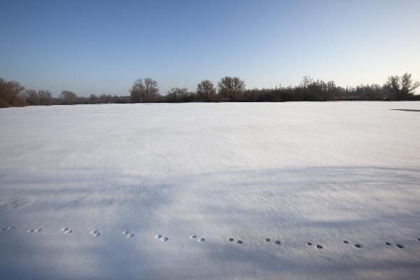 "\""Sneeuw, Sneeuwandschap Ooij, Ooy\"""