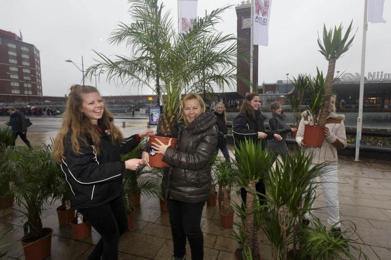 Uitdelen van kamerplanten, vervangen van de kerstboom. Nijmegen, 8-1-2015 . dgfoto.