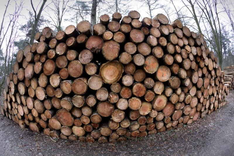 Heumensoord, gekapt hout, houtoogst gekapt hout. Nijmegen, 22-1-2015 . dgfoto.