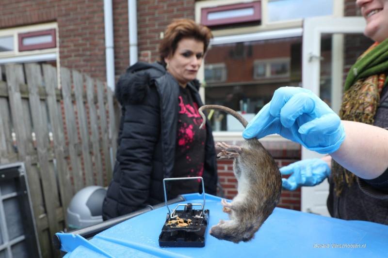 astrid jacobs heeft last van ratten, Waterkwartier. Nijmegen, 4-2-2018 .