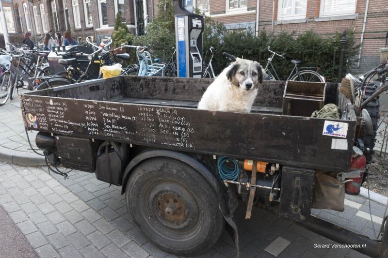plufabriek, guardian dog, hond op fietskar. Nijmegen, 24-4-2018 .