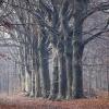 "\""Molenhoek, st.Jansberg, boom, bomen, bos\"""