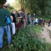 Wandeling met de IVN RijnWaal door de Bemmelerwaard op zoek naar bevers die actief zijn in de uiterwaarden.Bemmel, 6-8-2013 . dgfoto. bever.