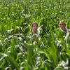 maisdoolhof Malden is zaterdag geopend, maar de mais staat nog een beetje laag. Malden, 15-7-2013 . dgfoto.