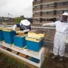 patienten Iriszorg die samen met imker Fred Schattevoet zorgen voor de bijen op dak stadhuis. Nijmegen, 31-7-2013 . dgfoto.