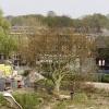 Omzagen boom op Margriet terrein. met politie en Floris. Nijmegen, 24-4-2015 . dgfoto.