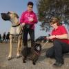 Op het strand Maaslanden (Gouden Ham) wordt het einde van het zwemseizoen gevierd met een Dog's Fair. Appeltern, 4-10-2015 . dgfoto.