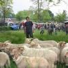 Dit is Dukenburg, markt in Meyhorst met schaapherder Wouter Bos, Jacqueline van der Boom, fotografe en Peter Schaap, organisator. Nijmegen, 22-5-2016 .