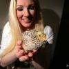 Sabine Keulen heeft kwarteleieren van de Albert Heijn uitgebroed. Er is 1 kuiken genaamd Ukkie geboren. Die gaat op de foto en er liggen weer nieuwe eitjes in broedmachine. Millingen, 31-3-2016 .
