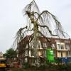 Monumentale treurbeuk bij Parc Margriet redde het toch niet en is omgezaagd. Nijmegen, 17-9-2016 .