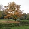 Herfst in het Goffertpark. Nijmegen, 20-10-2017 .
