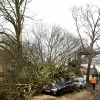 Stormschade,boom op auto, Berg en Dalseweg tegenover Tante Koosje... Nijmegen, 18-1-2018 .