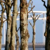 "\""stadsgezichten Nijmegen met o.a. brug terrein Hessenberg foto: Gerard Verschooten ? FC\"""