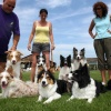 """Bordercollieclub in Bemmel, Border collie\"""